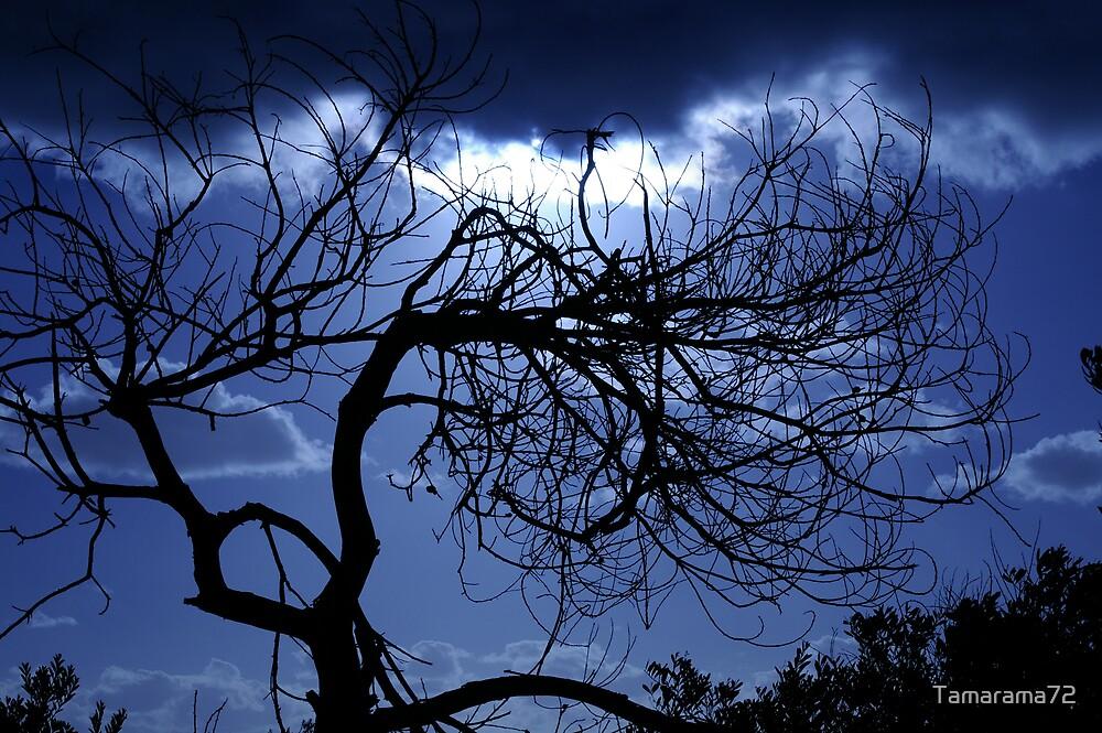 Moody Blue by Tamarama72