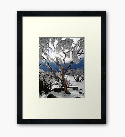 Snowgums 2 Framed Print