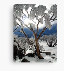 Snowgums 2 Canvas Print