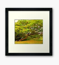 The Yellow Tree Framed Print