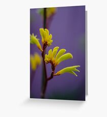 Kangaroo Paw Flower Greeting Card