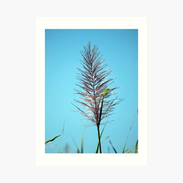 SUGAR CANE FLOWER Art Print