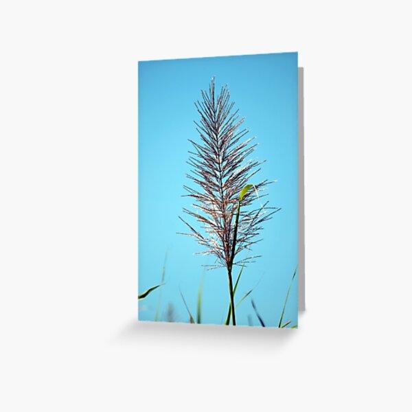 SUGAR CANE FLOWER Greeting Card