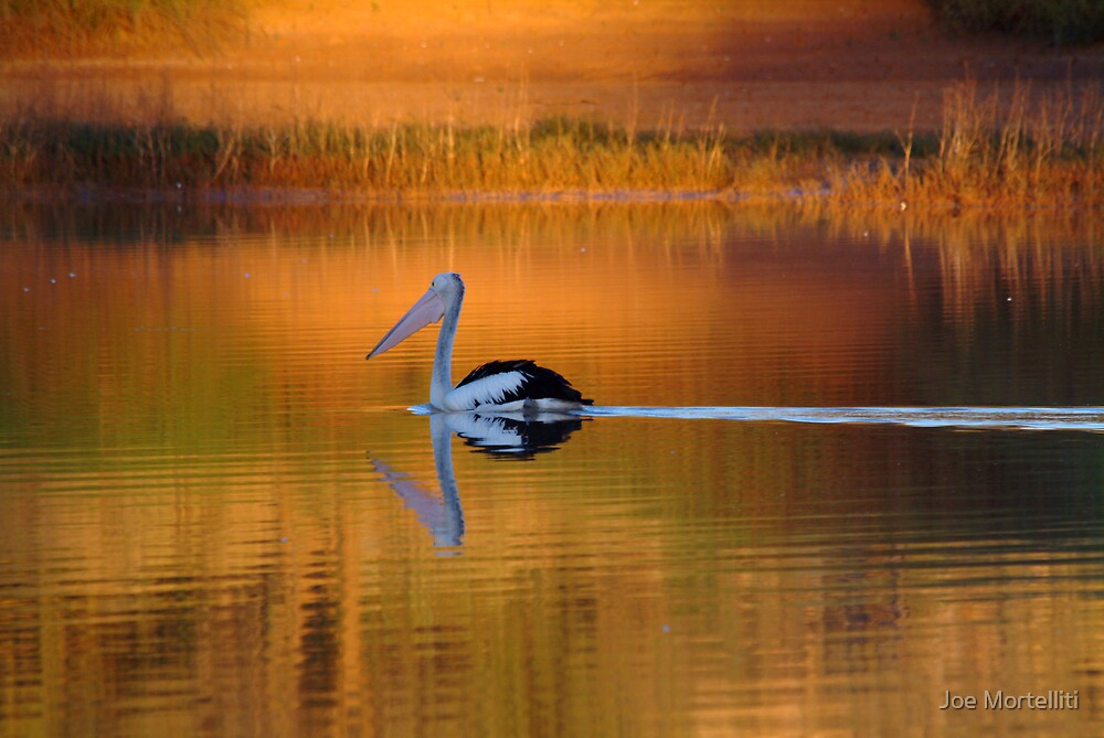 Pelican at Sunset Diamantina River by Joe Mortelliti