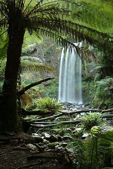 Hopetoun Falls, Otway Ranges forrest by Joe Mortelliti