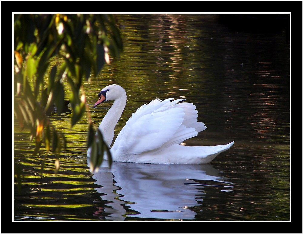 Purity by Lissy