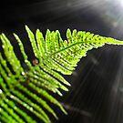 Toward the Light by everpresent