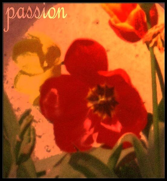 'passion' 2004 by Anna
