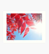 The Color of Fall Art Print