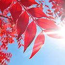 The Color of Fall by everpresent