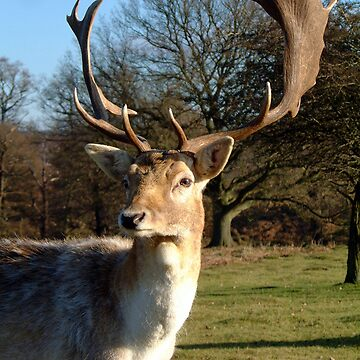 Stag by devster