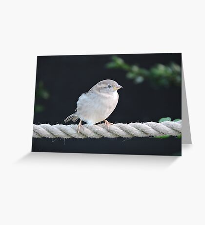 Walking The Tightrope  Greeting Card