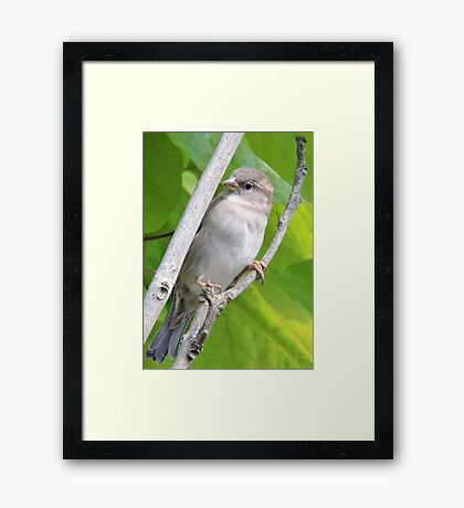 Dainty (With Wings) Framed Print