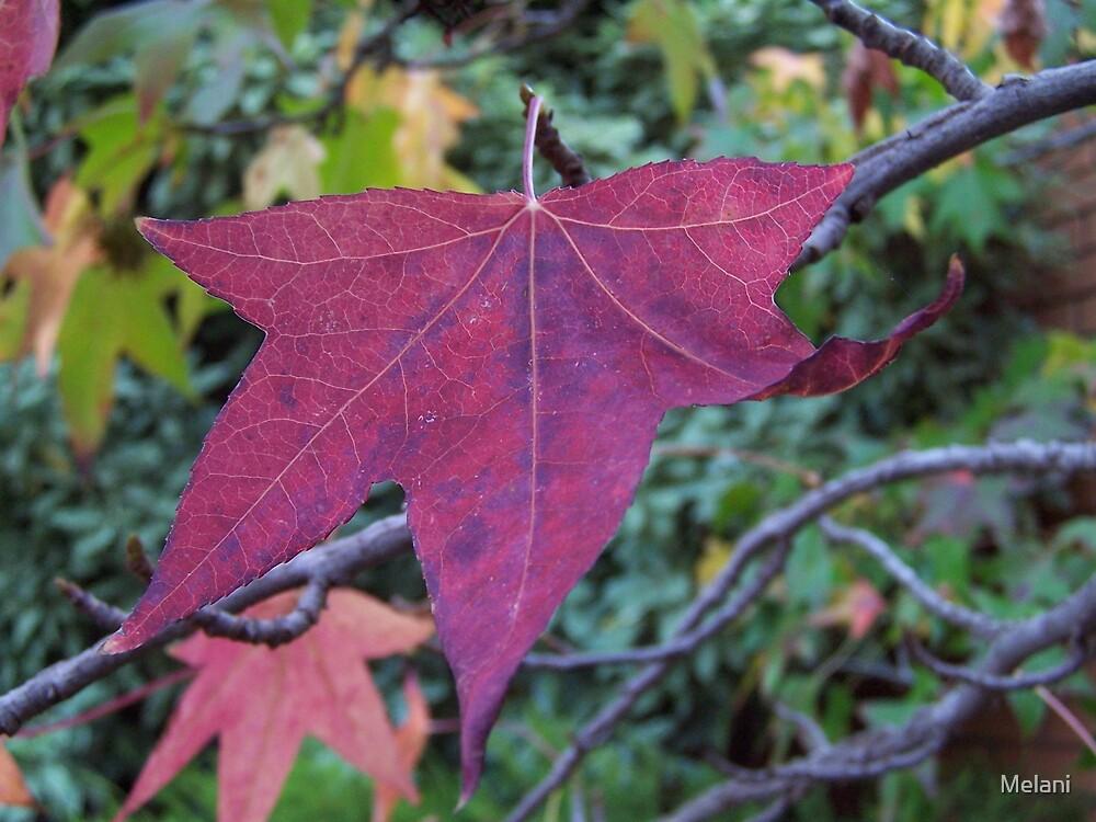 Red leaf by Melani