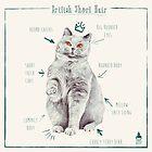 British Short Hair Kitty Illustration by ancapora