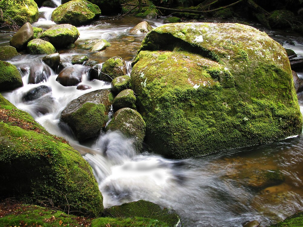 High Country Stream by Mark Williamson