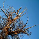 branching out... by Devan Foster
