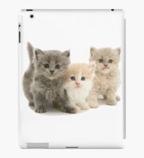 Cat cat and cat iPad Case/Skin