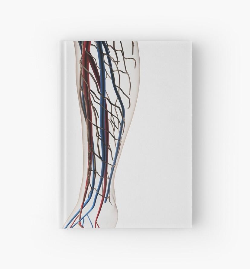 Cuadernos de tapa dura «Ilustración médica de arterias, venas y ...
