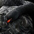 Black Swan by LydiaBlonde