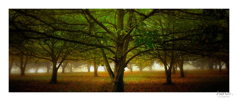 Chestnut Grove Pano by Aaron .