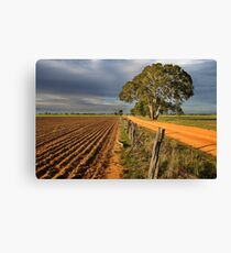 Old Banyena Road Canvas Print