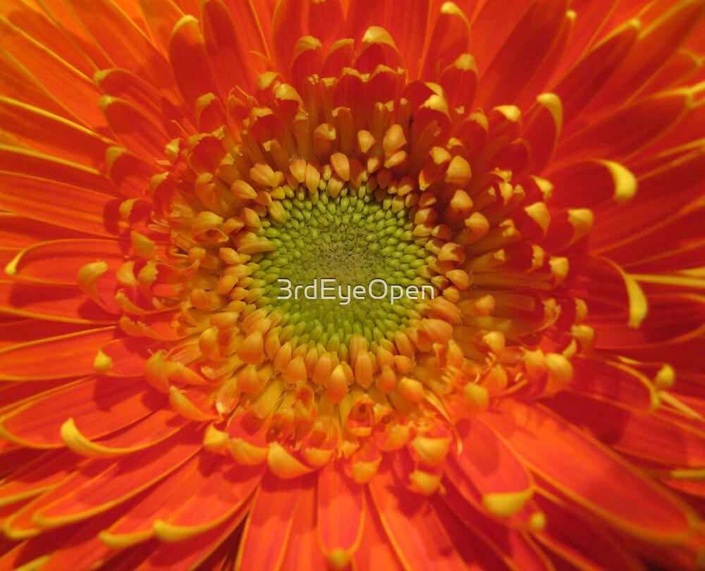 Orange Flare by 3rdEyeOpen