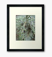 Aurora's Rime Framed Print