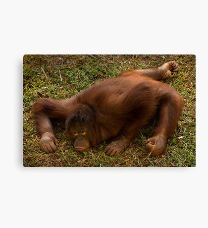 Crouching Ape, Hidden Assets Canvas Print
