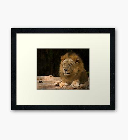 Time for a Royal Nap Framed Print