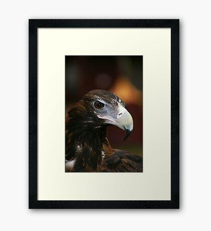 Eagle Eye 1 Framed Art Print