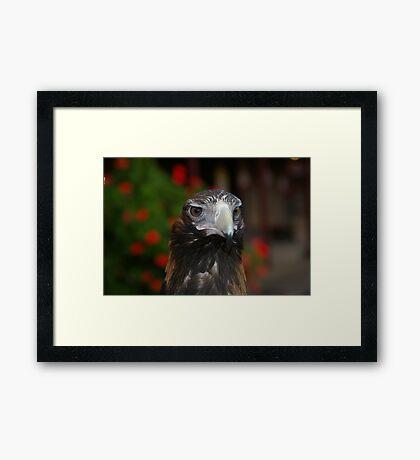 Eagle eye 2 Framed Art Print