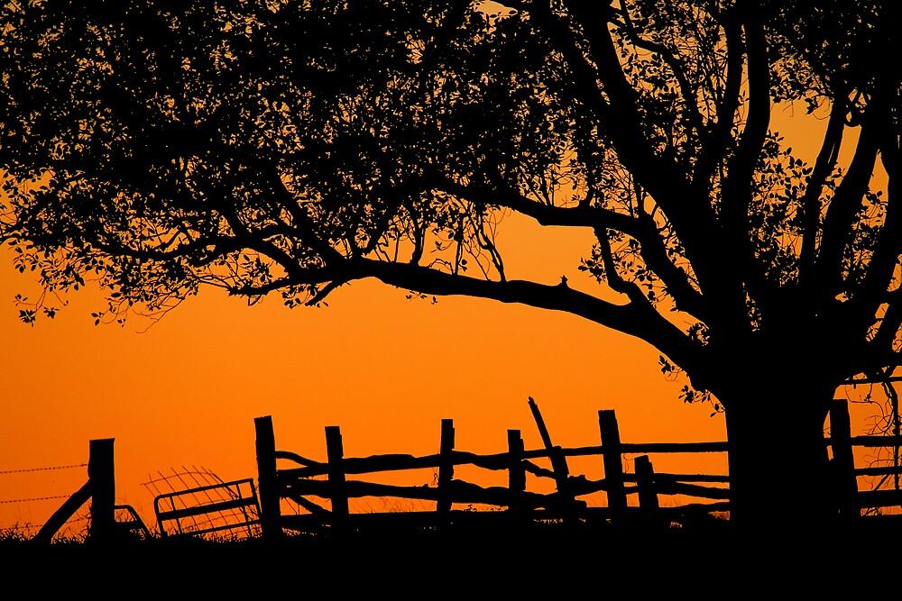 Orange Dawn by RedChevy