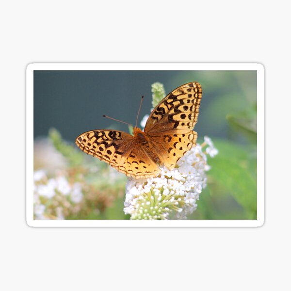 Great Spangled Fritillary Butterfly Sticker