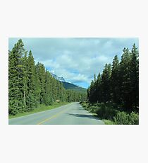 A Forested Trail Photographic Print