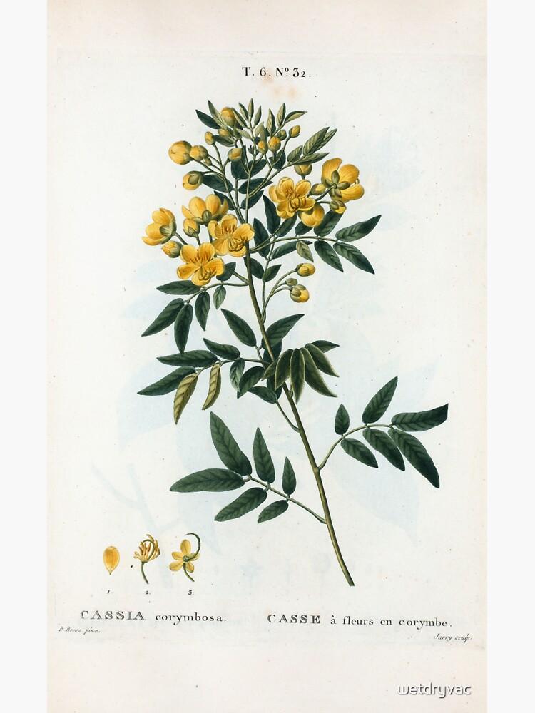 Traité des Arbres et Arbustes 0054 Cassia corymbosa Casse à fleurs en corymbe by wetdryvac