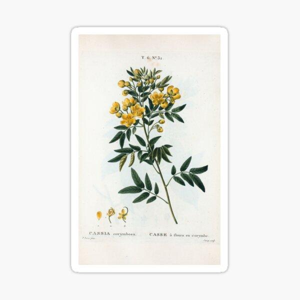 Traité des Arbres et Arbustes 0054 Cassia corymbosa Casse à fleurs en corymbe Sticker