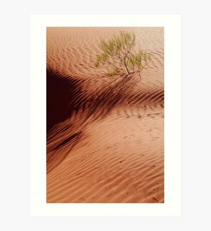 Lone Shrub and Sand Patterns, Simpson Desert Art Print