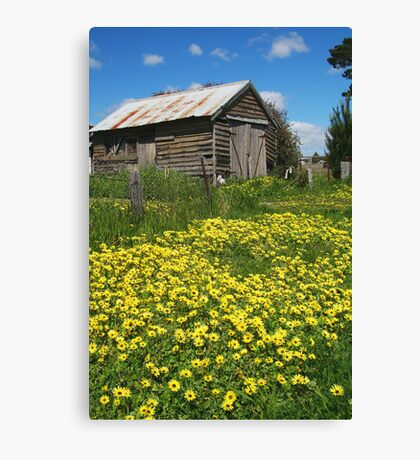 Yellow Daisies Snake Valley Canvas Print