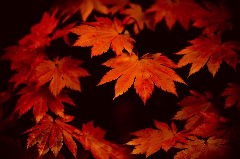 Autumn leaves by Alex Lau