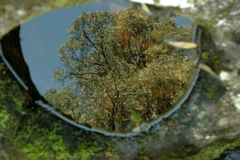 Reflections in a crocodile eye by Ivan Kemp