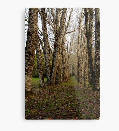 Dando's Camp Otway Ranges Metal Print