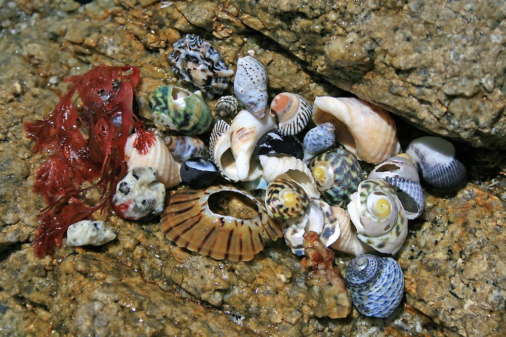 Sea Shells by JennyDiane