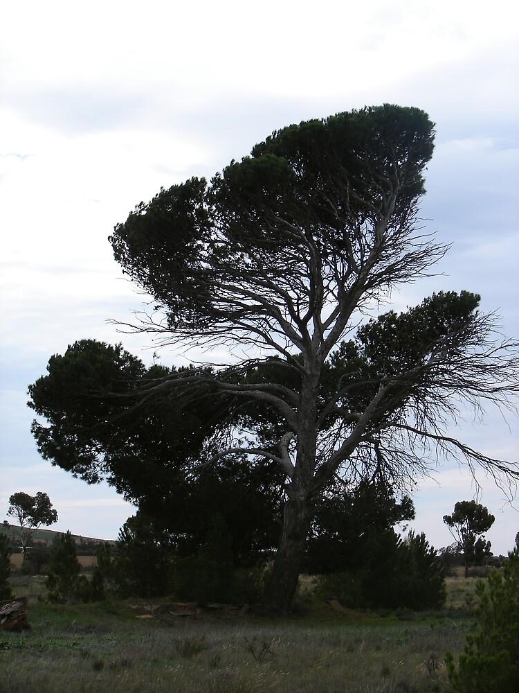 a tree by Smith Smith