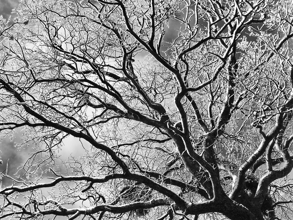 Snowy Oak Tree by everpresent
