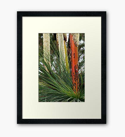Grass Trees, Brisabane Ranges Framed Print