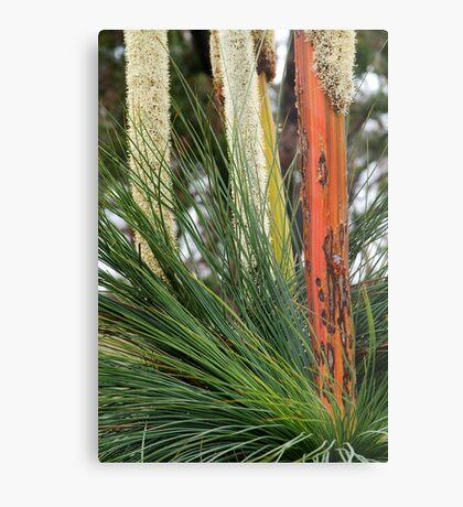 Grass Trees, Brisabane Ranges Metal Print