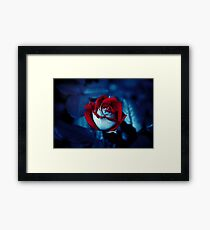 One Red Rose - High-Resolution Photo Framed Print