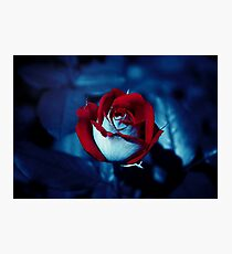 One Red Rose - High-Resolution Photo Photographic Print