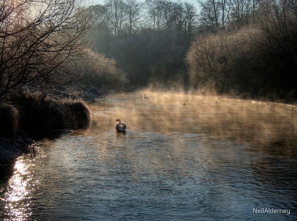 Swan in the Mist by NeilAlderney